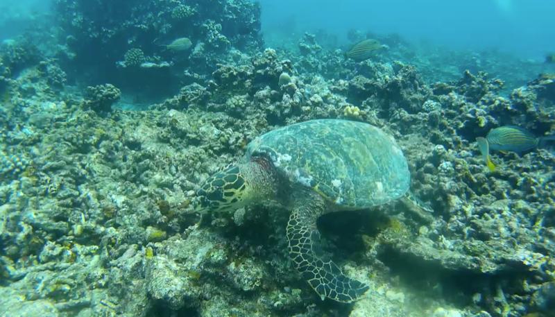 เต่าทะเล.png