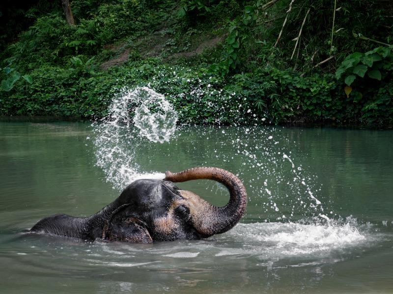 PES - Elephants - Cattleya (1).jpg