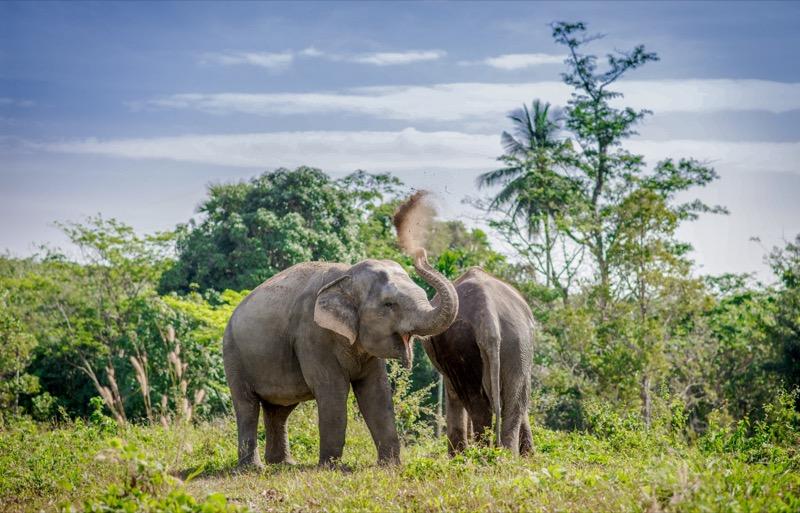 PES - Elephants - Kannika and Madee (5)