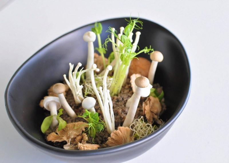 Mushroom Garden Halapua