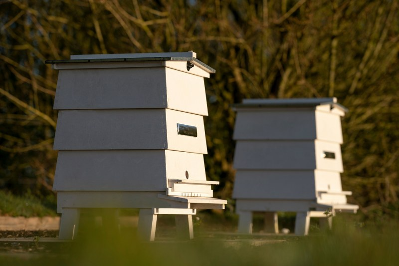 Roll-Royce Apiary project